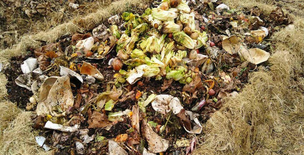 Compost pile under construction