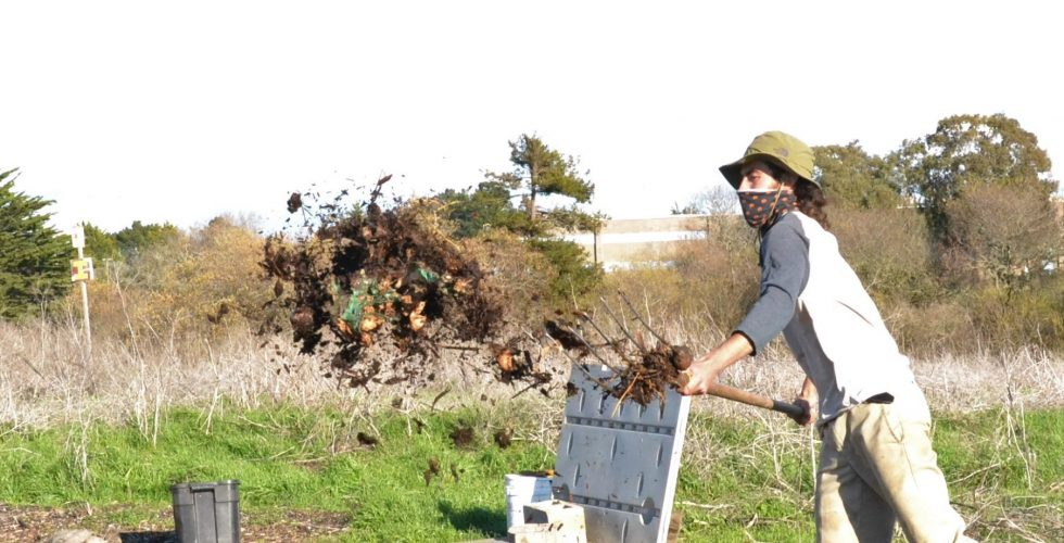 Person with pitchfork throwing compost